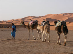 © Berber Treasure Morocco Tours of Morocco