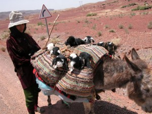 Morocco High Atlas Mountains - Berber Treasures Morocco Tours of Morocco