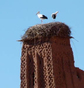Berber Treasures Morocco Tours of Morocco offer special bird watching tours of Morocco