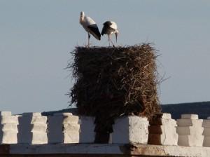 Morocco Travel Bird watching tours