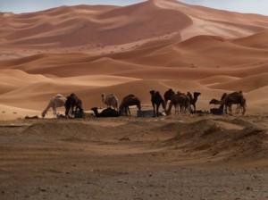 Morocco desert trips Erg Chebbi camel rides with Berber Treasures Morocco tours of Morocco desert