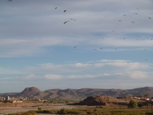 Morocco travel adventure: Raptor spring migration through Morocco 2016